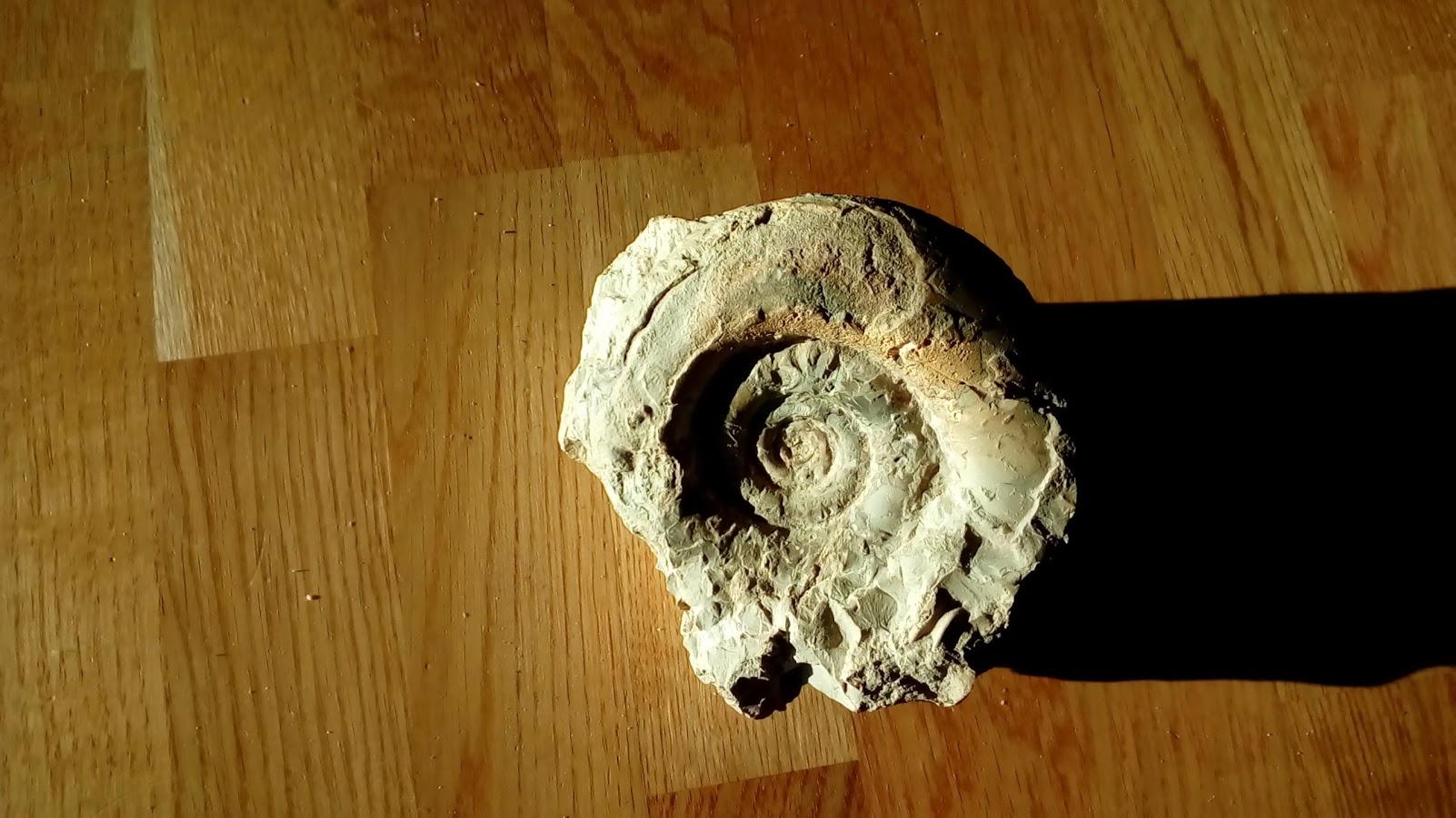 fossili13