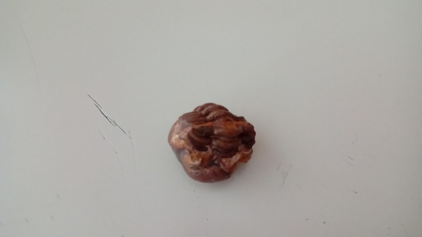 fossili4