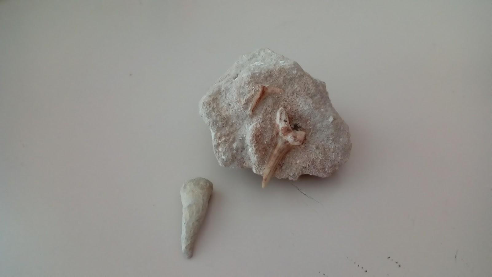 fossili6