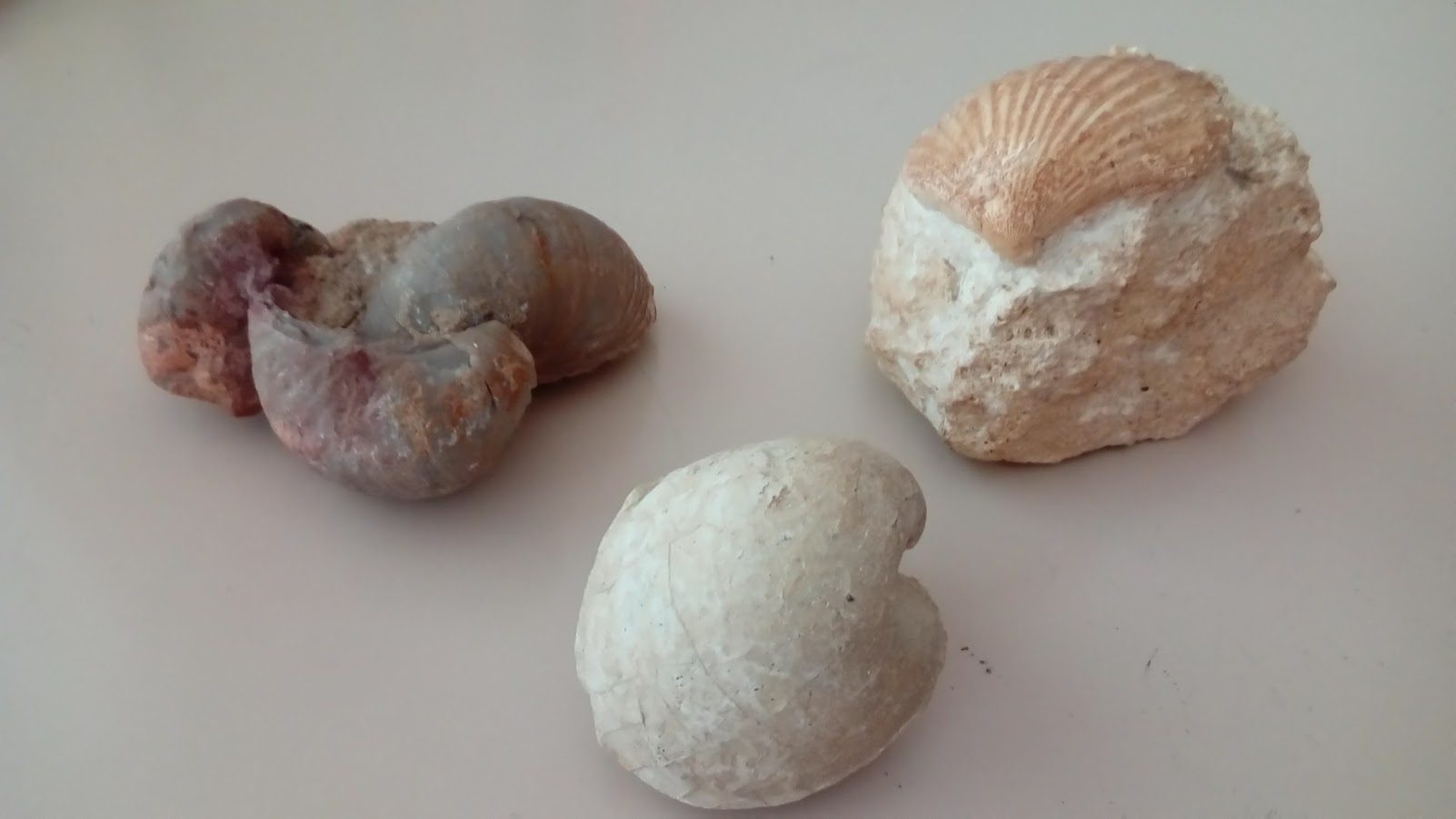 fossili7