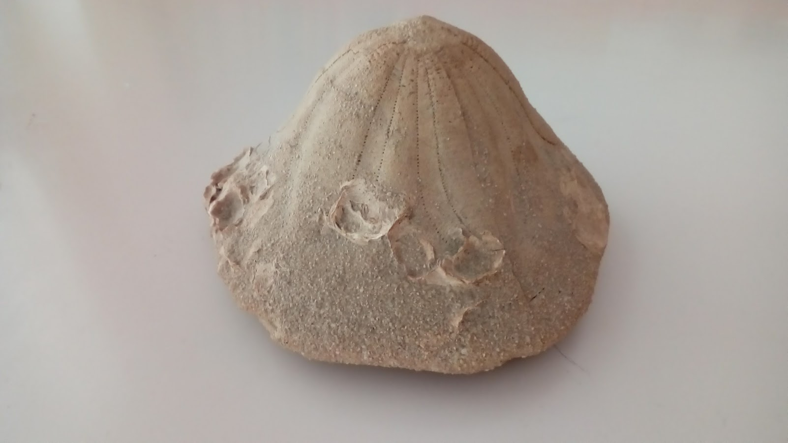 fossili9